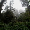 Forest on the summit of Doi Inthanon
