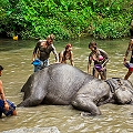 FULL DAY ELEPHANT JUNGLE SANCTUARY (No Riding)