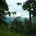 A Day mountain and jungle trek